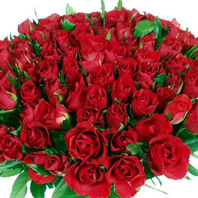 101 roses rouges