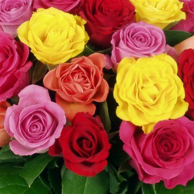 Livraison de fleurs avec le fleuriste for Rose livraison