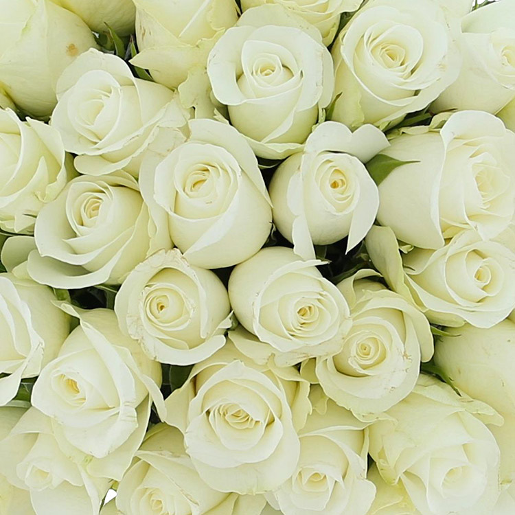 40-roses-blanches-200-2844.jpg