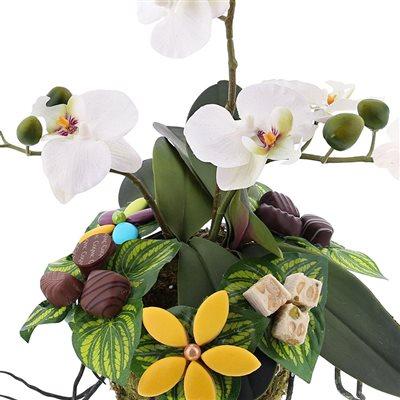 orchidee gourmande