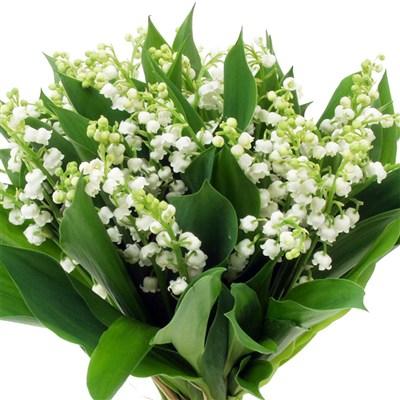1er mai - Photos de bouquet de muguet ...