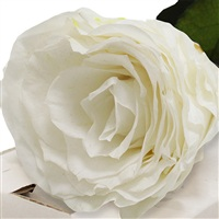 rose-blanche-stabilisee-200-1340.jpg