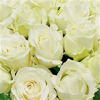 roses-blanches-gb-15-200-1693.jpg
