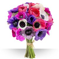 Un bouquet de 30 anémones aux couleurs variées pour offrir une touche de dive...