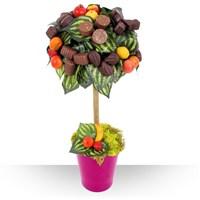 Image Arbre chocolat par Bebloom