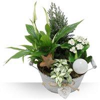 Bebloom vous propose une magnifique composition florale de plantes variées da...