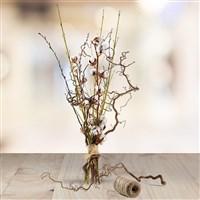 Cotton Wood - bebloom