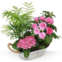 Composition de plantes vertes, et plantes fleuries pour un cadeau d'amour � l...