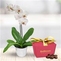 Les packs fleuris : Orchidee et ses amandes caramelisees - bebloom