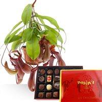 Pack cadeau mêlant plaisir et gourmandise avec cette plante carnivore appelée...